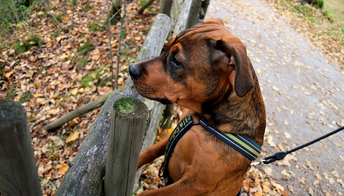 how to find a break in an underground dog fence